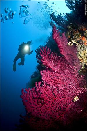 Vörös-tenger búvárparadicsom