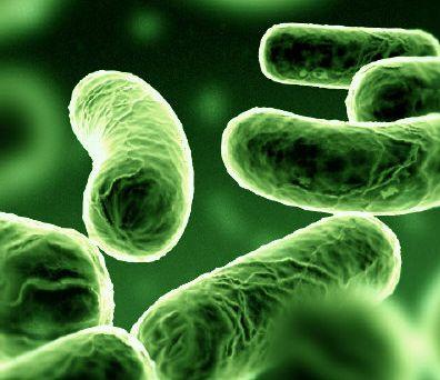 élő baktériumok akridin enterobiasis