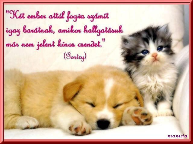 barátokról szóló idézetek Kittyh: Idézetek a barátságról :D