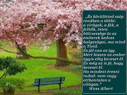 honvágy versek idézetek Wass Albert: Honvágy   Wass Albert,   menusgabor Blogja   2014 01