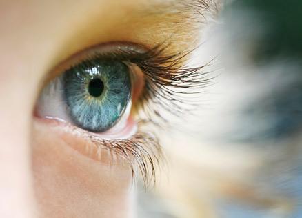 jávorszarvasok látása gyenge
