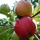 Az élet kertje és az egészséges táplálkozás közösség