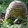 Mézelő méhek és termékeik