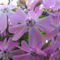tavaszi virágok 002