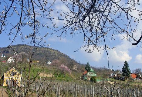 Tavaszodik a Szent György- hegyen