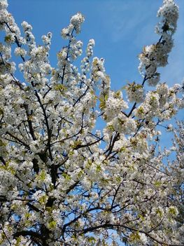 Tavasz Pilisszentivánon 17