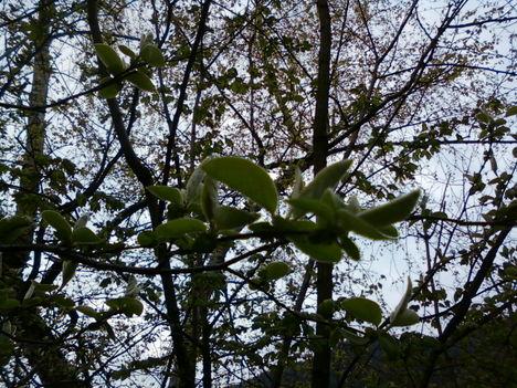 Tavasz Pilisszentivánon 2