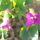 Bérczes Éva virágai
