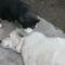 Gerda és Félix cica