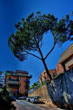 Via Francesco Tamagno