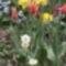 Virágos tavasz 2011