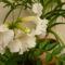 virág 2011ápr 002