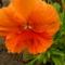 virág 2011ápr 009