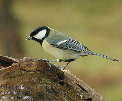 A kis madár