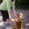 kutyával játszik