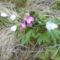 Fehér és lila berek virág