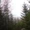 Nagyhagymás kukucskál a fák közül