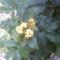 Virágaim 004