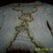 Malvina munkái fehér felső