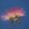 0075 virág