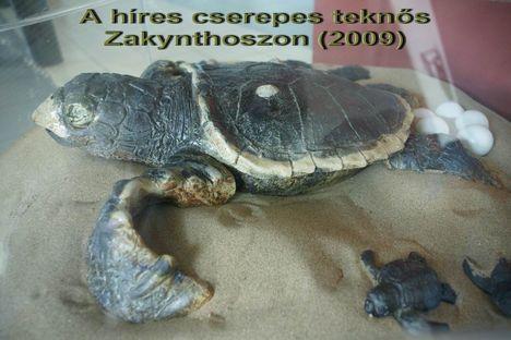 Zakynthos 17 A híres teknős