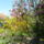Biokert_magnolia_1136979_8623_t