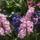 Király Monika virágai