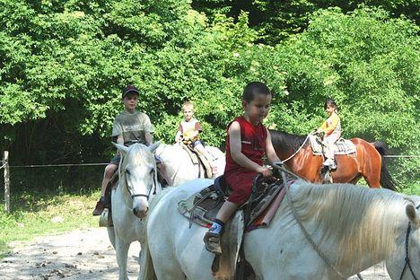 - Dani ovodásokkal a lovasiskolában