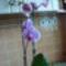 Orhideák 2