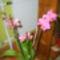 Orhideák 4