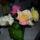 Székelyné Hebők Rózsika virágai