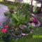 sziklakerti virágaim 003