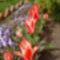Virágaim-2011