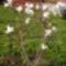 Virágaim-41