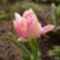 Virágaim-42