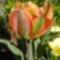 Virágaim-47