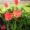 Virágaim-48