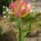 Virágaim-49