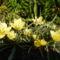 virágaim-51