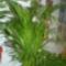 virágaim 9