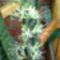 virágba borulva