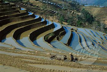 jünnani teraszos földművelés