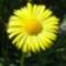 Virág 10