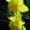 Virág 11