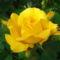 Virág 3