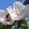 Virág 6