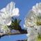 Virág 7