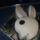 Playboy_1145973_1788_t