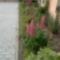 virágaim május 008