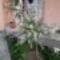 virágaim május 009